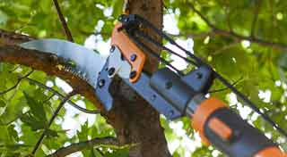 Best Saw-for Cutting Tree Branches